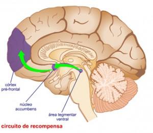 circuito-cerebral-de-recompensa